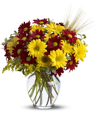 Fall for Daisies in Chatham ON, Pizazz!  Florals & Balloons