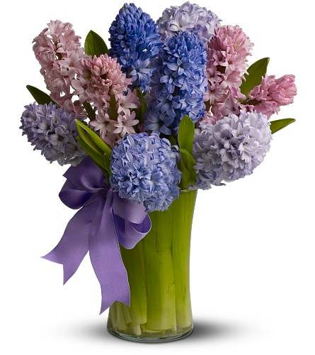 Fragrant Hyacinth in Bothell WA, The Bothell Florist