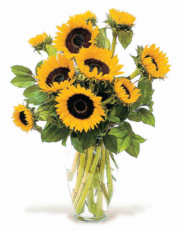Sunny Sun Flowers in Big Rapids, Cadillac, Reed City and Canadian Lakes MI, Patterson's Flowers, Inc.
