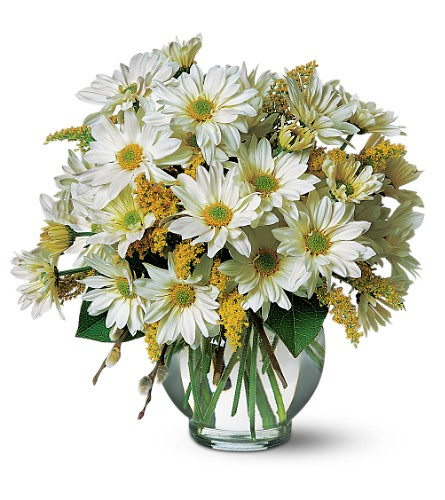 Daisy Cheer in Abington MA, The Hutcheon's Flower Co, Inc.