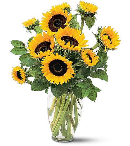 Shining Sunflowers in Hot Springs AR, Johnson Floral Co.