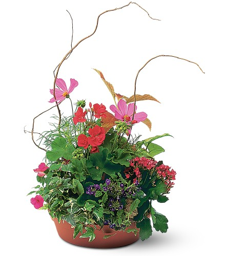 Summer Garden Planter in usa-send-flowers NJ, Stanley's America's Florist & Gifts