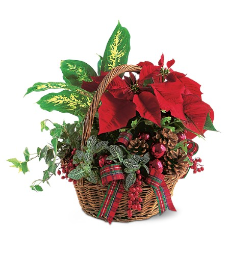 Holiday Planter Basket in Oklahoma City OK, Array of Flowers & Gifts