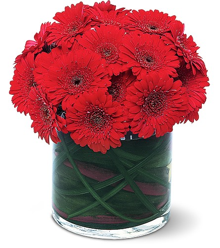 Red Gerbera Collection in Tuckahoe NJ, Enchanting Florist & Gift Shop