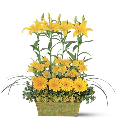 Yellow Garden Rows in Weymouth MA, Bra Wey Florist