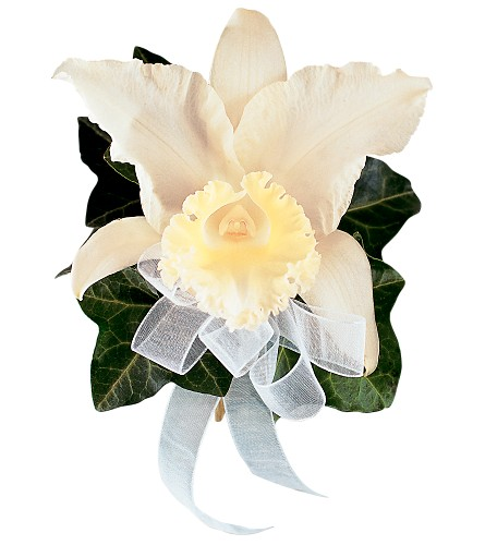 Japhet Orchid Corsage in Orlando FL, Harry's Famous Flowers