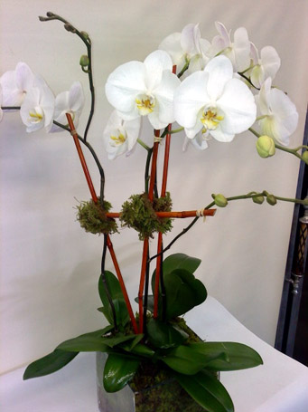 THE TRIPLE TREAT in New York NY, Fellan Florists Floral Galleria