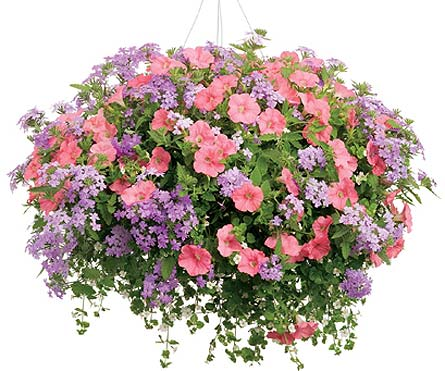 Mixed hanging basket in big rapids mi pattersons flowers inc view larger mixed hanging basket mightylinksfo