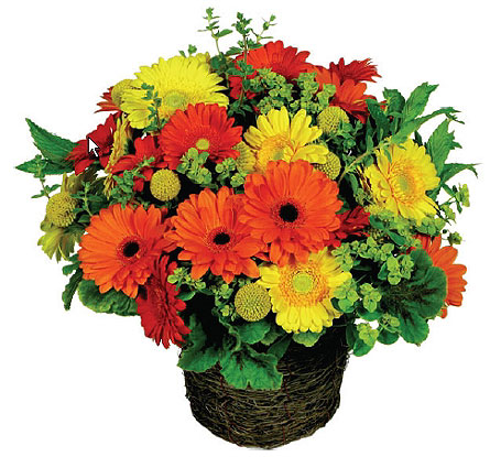 Daisy Basket in New York NY, Fellan Florists Floral Galleria