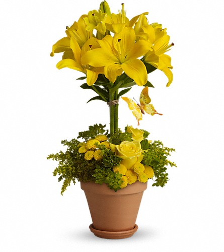 Yellow Fellow in Tuscaloosa AL, Pat's Florist & Gourmet Baskets, Inc.