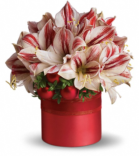 Teleflora's Peppermint Amaryllis in Salt Lake City UT, Especially For You