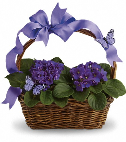 Violets And Butterflies in Jersey City NJ, Entenmann's Florist