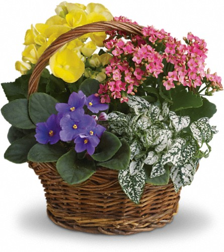 Spring Has Sprung Mixed Basket in Lewistown MT, Alpine Floral Inc Greenhouse