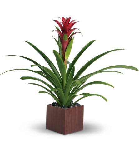 Teleflora's Bromeliad Beauty in Woodbridge NJ, Floral Expressions