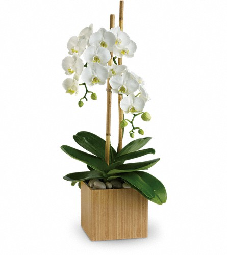 Teleflora's Opulent Orchids in Grand Falls/Sault NB, Grand Falls Florist LTD