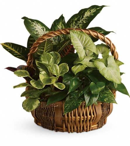 Emerald Garden Basket in Big Rapids MI, Patterson's Flowers, Inc.