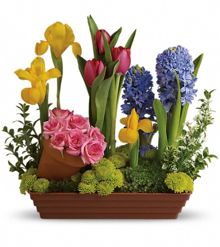 Spring Favorites - Deluxe in Fort Worth TX, TCU Florist