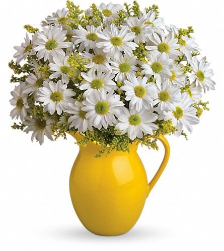 Teleflora's Sunny Day Pitcher of Daisies in Puyallup WA, Benton's Twin Cedars Florist