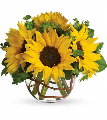 Sunny Sunflowers in Amherst NY, The Trillium's Courtyard Florist