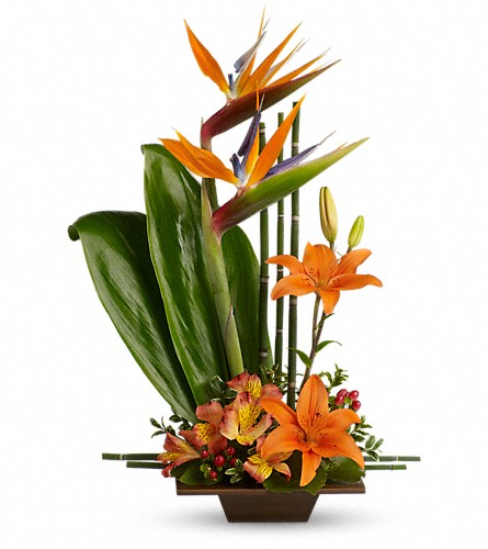 Teleflora's Exotic Grace in Oklahoma City OK, Array of Flowers & Gifts