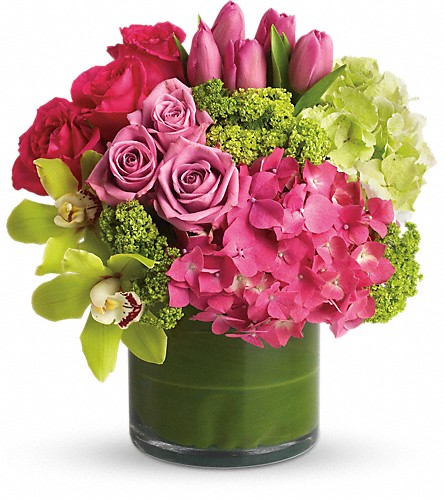 New Sensations in Staten Island NY, Evergreen Florist