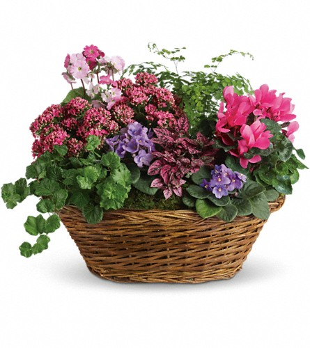 Simply Chic Mixed Plant Basket in Wolfeboro Falls NH, Linda's Flowers & Plants
