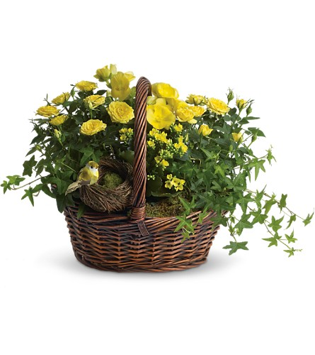 Yellow Trio Basket in Springfield OH, Netts Floral Company and Greenhouse