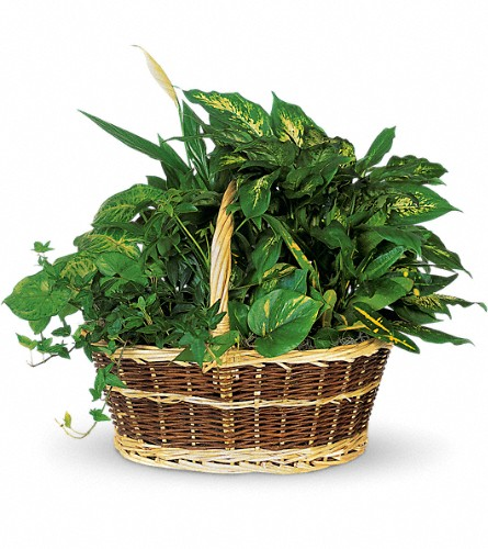 Large Basket Garden in Hollywood FL, Al's Florist & Gifts