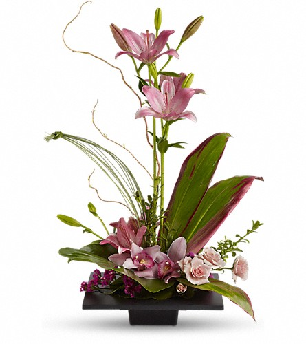 Imagination Blooms with Cymbidium Orchids in Festus MO, Judy's Flower Basket