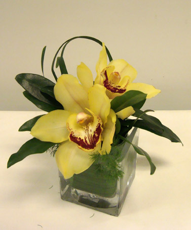 Lemon Orchid Treasure in Victoria BC, Fine Floral Designs