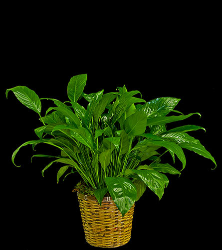 Charmant View Larger. Closet Plant ...