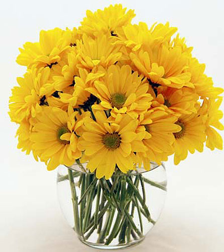 Yellow-Daisies in San Clemente CA, Beach City Florist