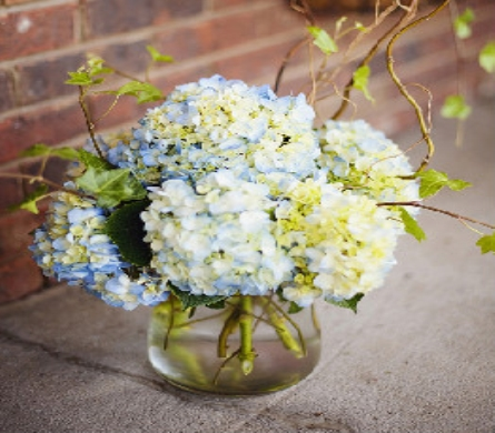 Hydrangea Vase with Curly Willow  in Birmingham AL, Continental Florist