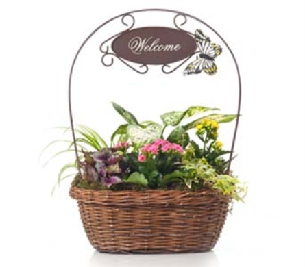 Buds and Blooms Welcome Assortment Planter in Federal Way WA, Buds & Blooms at Federal Way