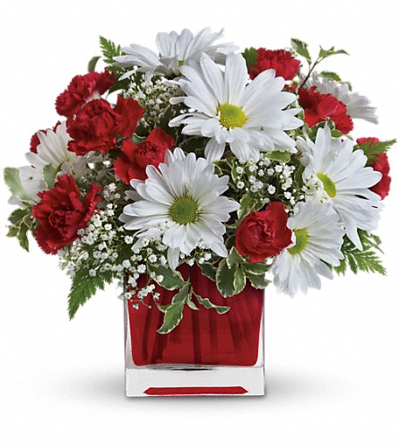 Red And White Delight by Teleflora in Meriden CT, Rose Flowers & Gifts