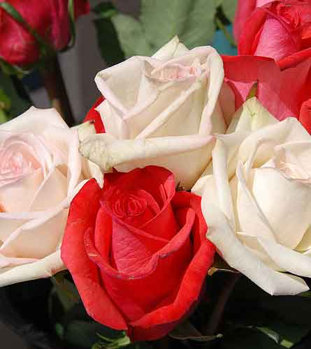 Flowersdepot.com 6 Roses red & white. Just to say in San Clemente CA, Beach City Florist