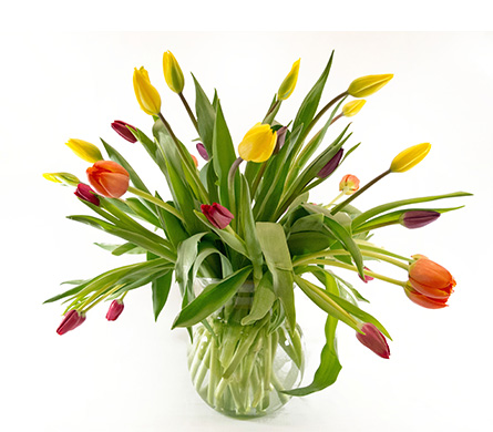 Abundant Tulips in Amherst NY, The Trillium's Courtyard Florist