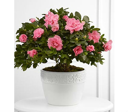 The FTD® Vibrant Sympathy™ Planter in San Clemente CA, Beach City Florist
