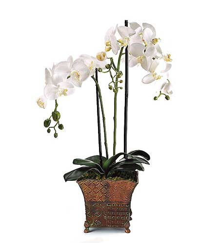 Premium Double Orchid in Palm Springs CA, Palm Springs Florist, Inc.