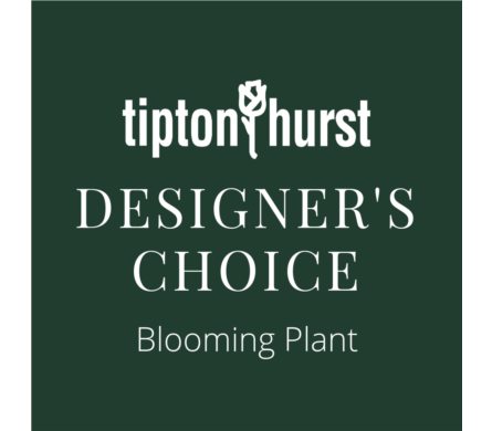 Designer's Choice Blooming Plant in Little Rock AR, Tipton & Hurst, Inc.