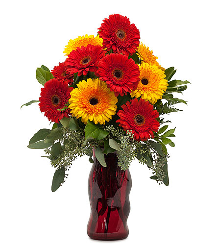 Mighty Gerberas in Alexandria and Pineville LA, House of Flowers