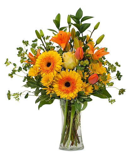 Citrus Spray in Mesa AZ, Razzle Dazzle Flowers & Gifts