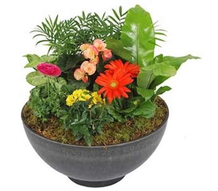 Bowl Planter in Madison WI, Felly's Flowers