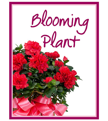 Blooming Plant Deal of the Day in Edmonton AB, Flowers By Merle