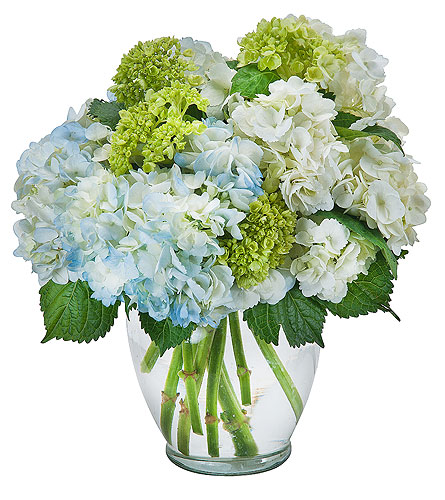 Southern Hospitality in Raleigh NC, North Raleigh Florist