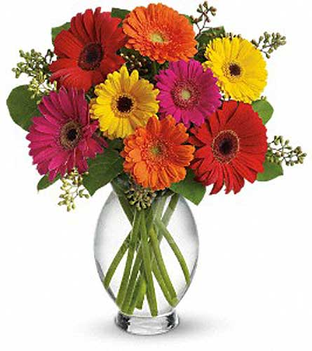 Teleflora's Gerbera Brights in Orleans ON, Flower Mania