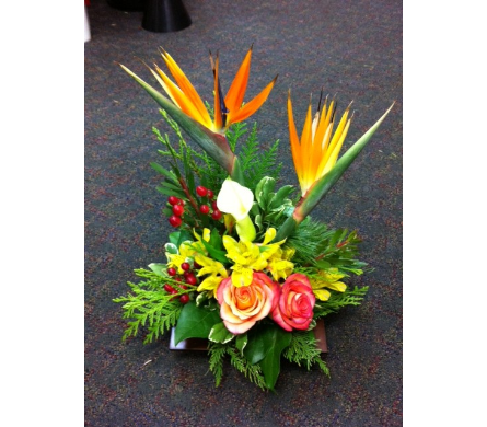 Bird of paradise in West Vancouver BC, Flowers By Nan