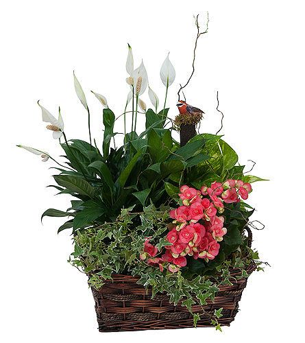 Living Blooming Garden Basket in Jonesboro AR, Bennett's Flowers