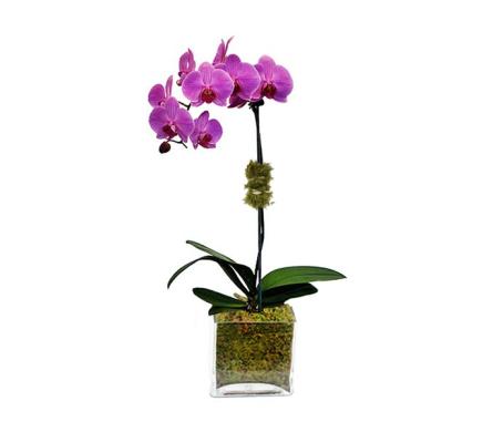 Simple Single Stem Purple Orchid in Nashville TN, Emma's Flowers & Gifts, Inc.