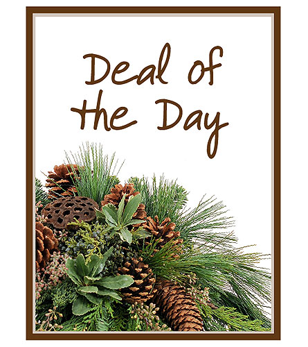 Deal of the Day - Winter in San Antonio TX, The Flower Forrest